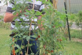 jardinage-residence-erdre-cens