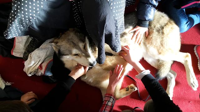 Rencontre avec un chien loup lors de l'atelier « Un animal, des anim'mots » à l'IME Alexis Ricordeau.