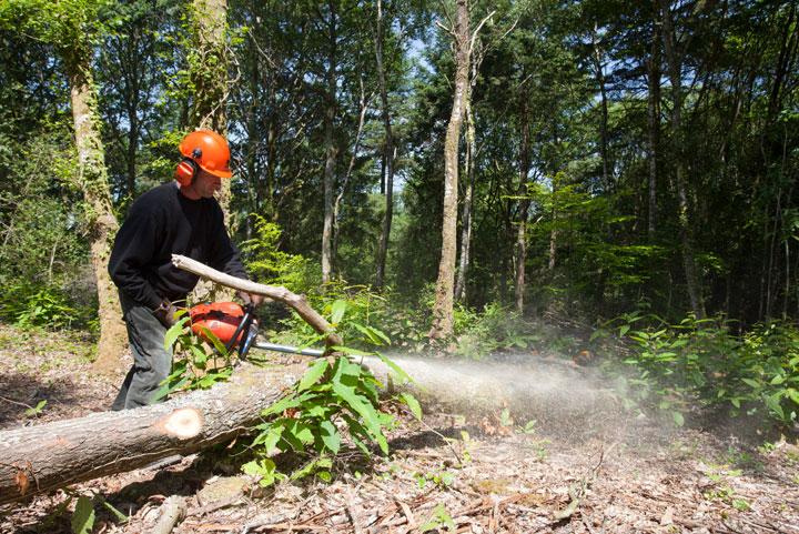 Entretien forestier à l'ESAT Val de Vay