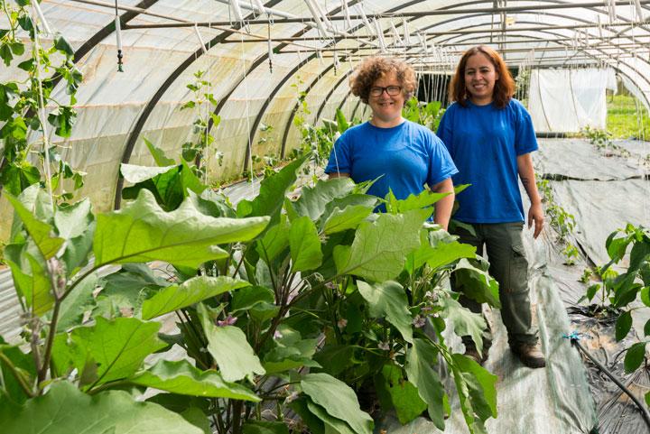 Maraichage biologique avec la production de légumes bio vendu chaque mercredi à l'ESAT
